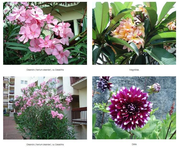 flowers310jpg