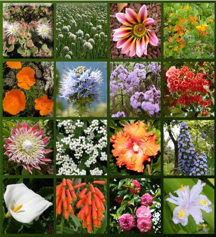 Madeira Flowers - The charm of our flowers 2