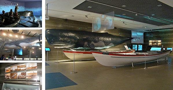 Madeirawhalemuseum1