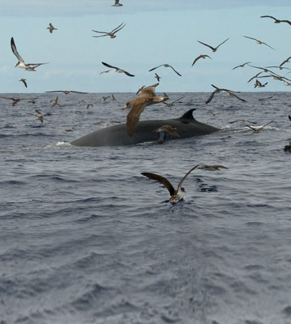 Cetaceans Madeira - dolphins and whales 1