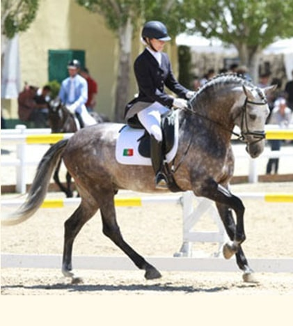 The second edition of the Equestrian Festival City Funchal start on October 4 1
