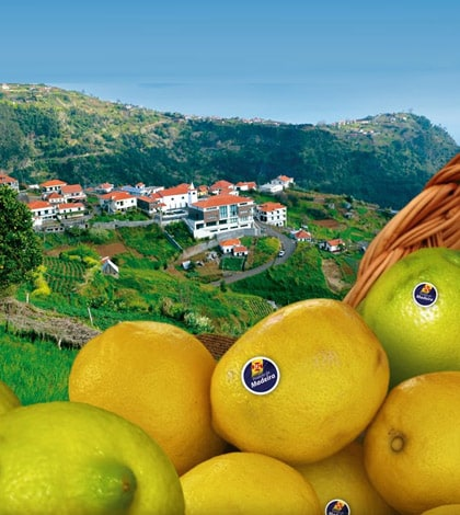 Madeira Lemon Festival 4