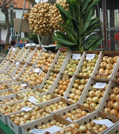 Madeira Onion Festival 2014