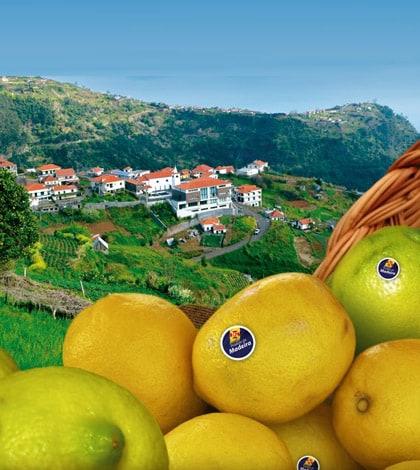 Madeira Lemon Festival 1