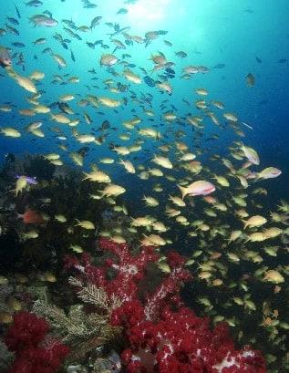 Underwater Nature Madeira Festival II 1