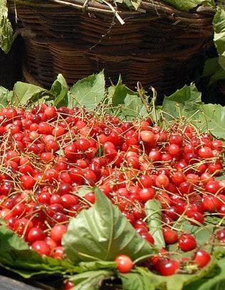 Madeira Cherry Festival 1
