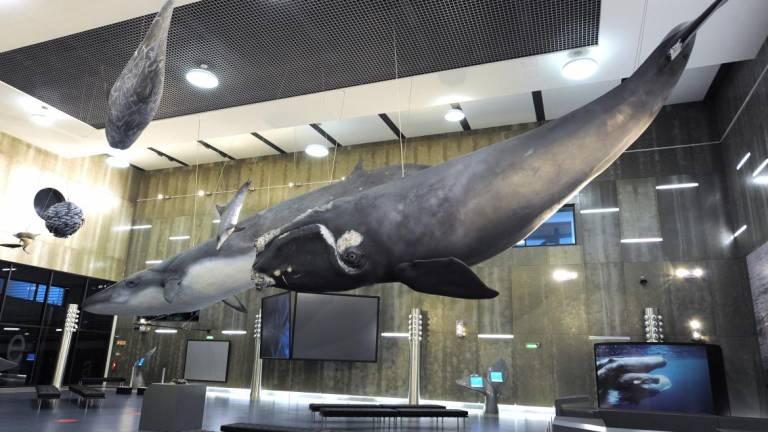 Museu da Baleia - Machico
